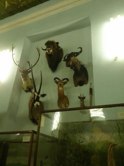Екскурсія до зоологічного музею